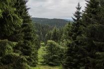 Ausblick vom Harzer-Hexen-Stieg