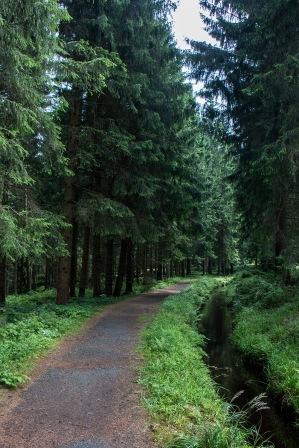 Wasserkanal am Harzer-Hexen-Stieg