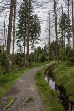 Harzer-Hexen-Stieg kurz hinter Torfhaus