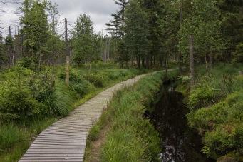 Harzer-Hexen-Stieg mit Wasserkanal