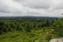 Ausblick auf den Harz und Torfhaus