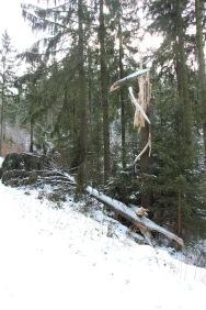 Sturmschaden im Harz