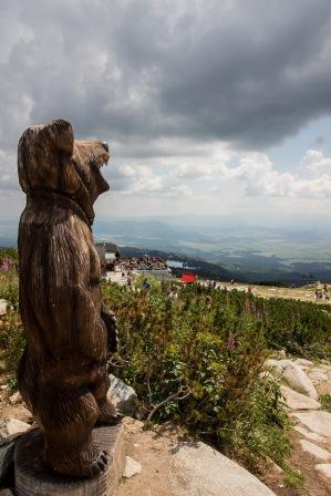 Der Bär am Berg