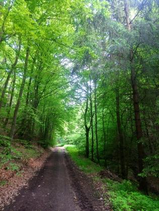 Unterwegs im Eifelwald