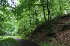 Unterwegs durch den Eifelwald