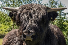 Ein Rind am Wegsrand