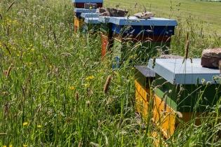 Hier wird gerade unser Honig produziert